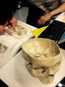Anatomian opiskelua Helsingin lääketieteellisessä